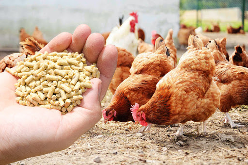How to save on chicken feed South Africa