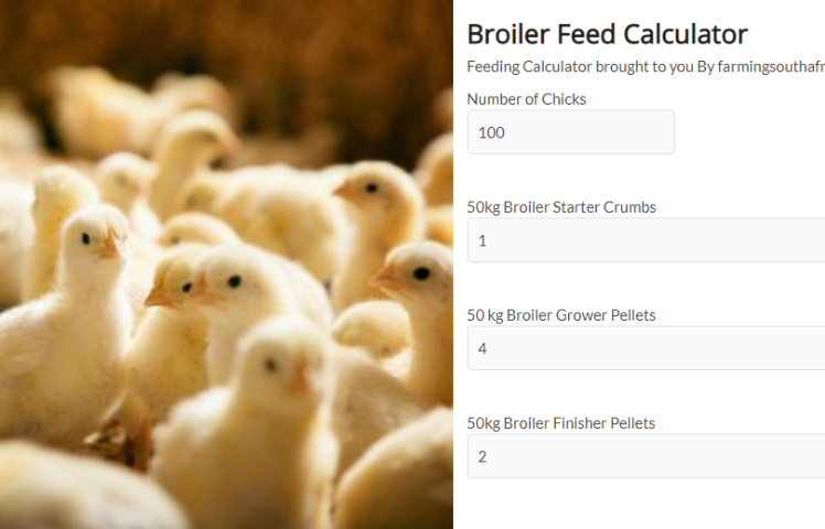 Chicken Feeding Calculator South Africa
