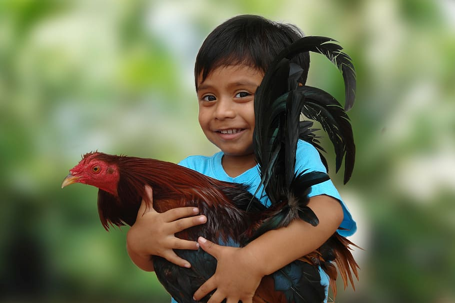 Chicken Farming can be Fun as a Business