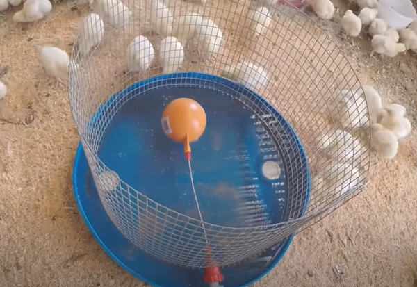 Homemade Chicken drinking system