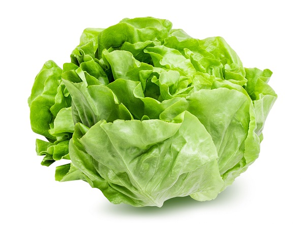 Lettuce is easy to grow and very profitable