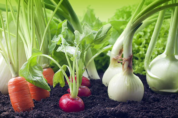 What is Organic Farming and what is its advantages