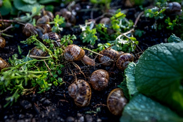 How to start a profitable Snail farm in South Africa