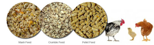 How to make chicken feed for broilers and layers