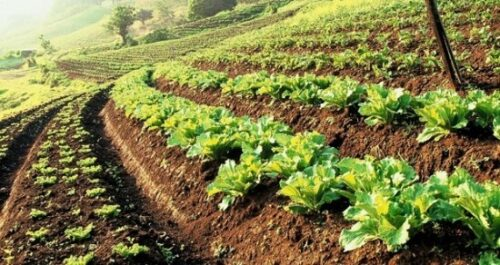 Successful Farming in South Africa