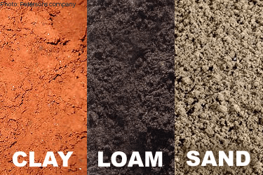 Understanding the Relation of Soil to Plants
