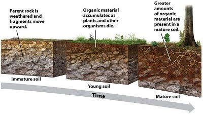 Where do soils come from and how do they form